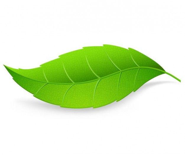 Pin de Hyunjung Kim en Design  Pinterest  Hojas verdes Vectores