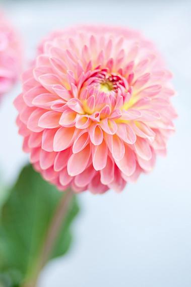 Fotografie di fiori.
