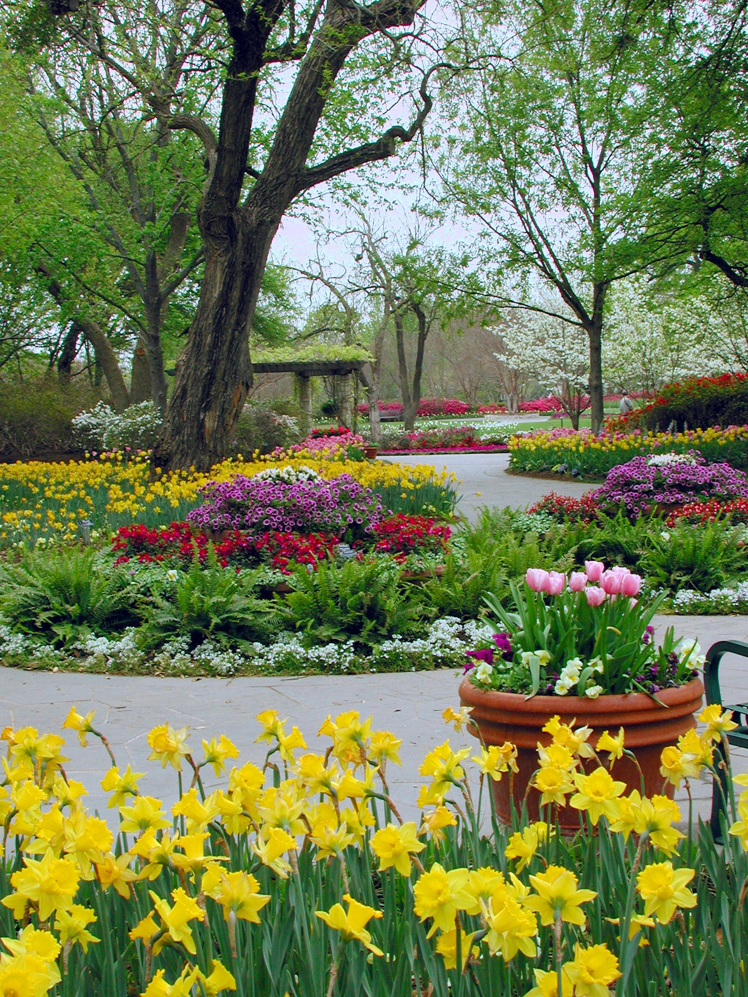 dallas blooms at the arboretum - seriously, what's not to love