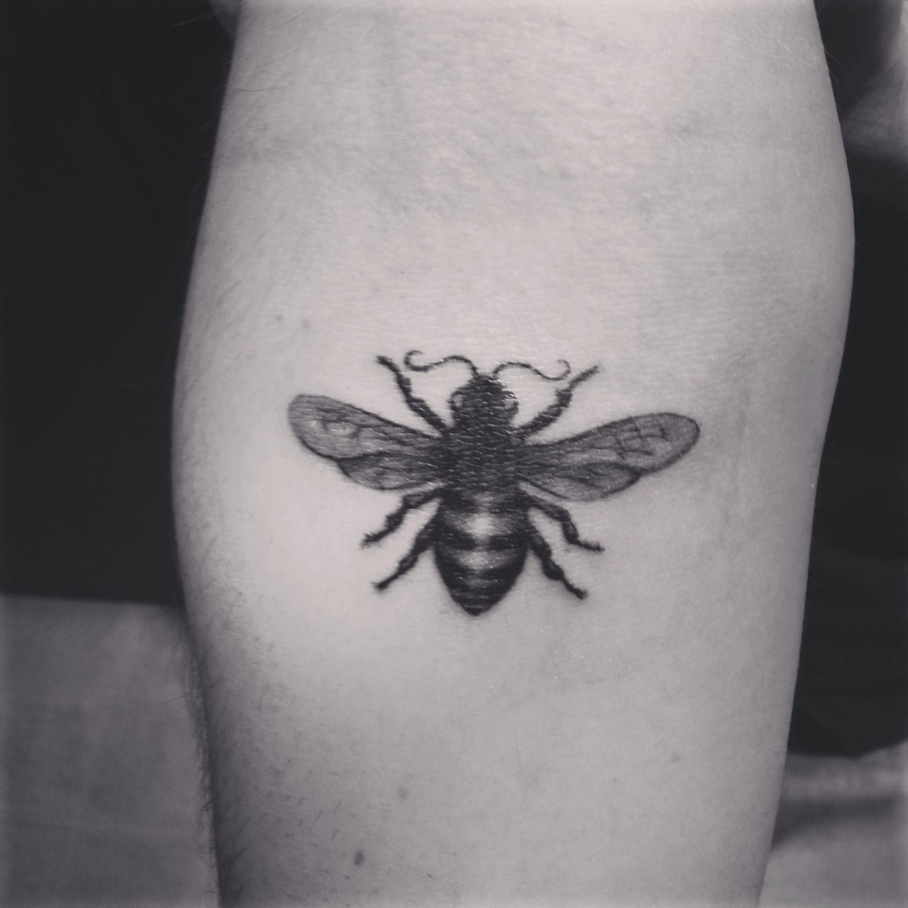 honey bee by sam king at golden spiral