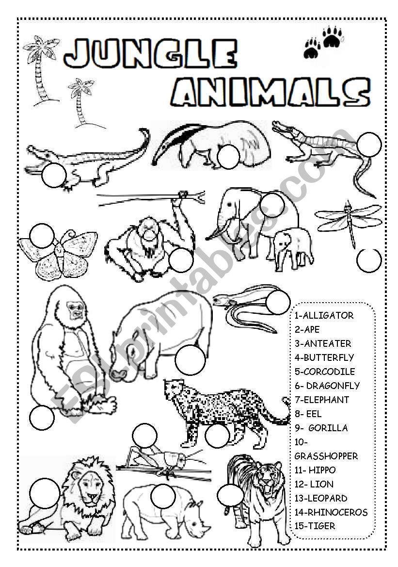 Pin on Animal Week