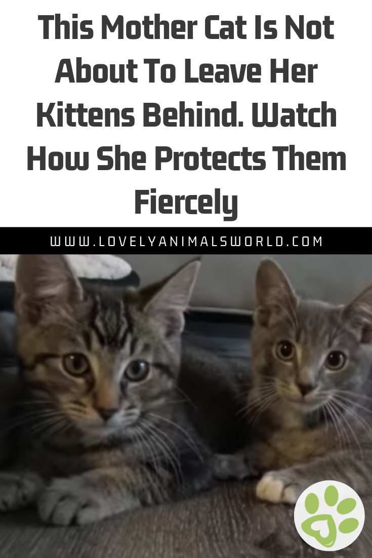 This Mother Cat Is Not About To Leave Her Kittens Behind Watch How She Protects Them Fiercely Lovely Animals World Animals Animall Kittens Cats Mother Cat