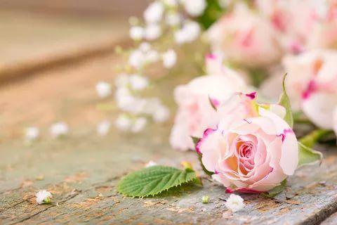 мелкие розовые розы на полу обои на рабочий стол: 11 тыс ...
