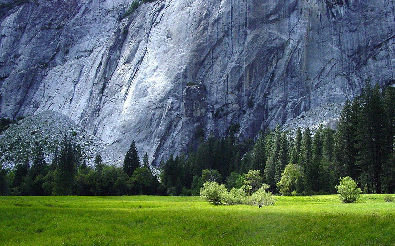 A Beautiful Meadow in Beautiful Yosemite National Park, USA