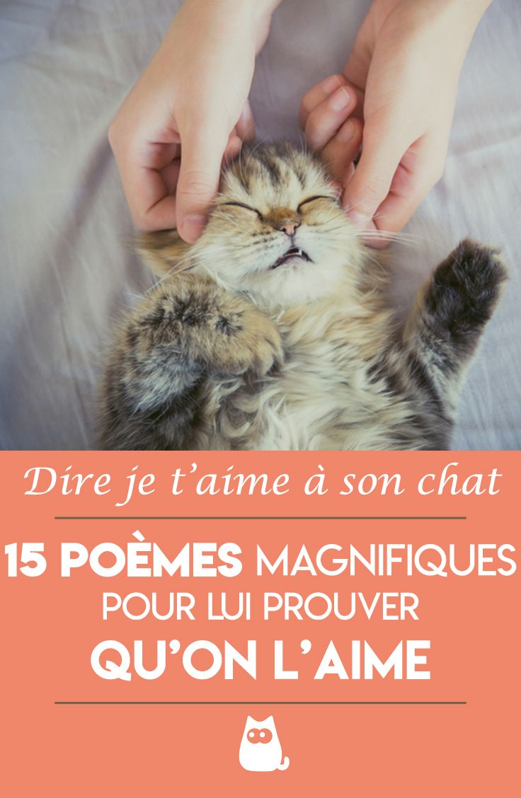 Poeme Pour Mon Chat Que J'aime : poeme, j'aime, Poème, J'aime, Magnifiques, Poèmes, Félins, Chats, Chatons,, Chat,, Chaton, Rigolo
