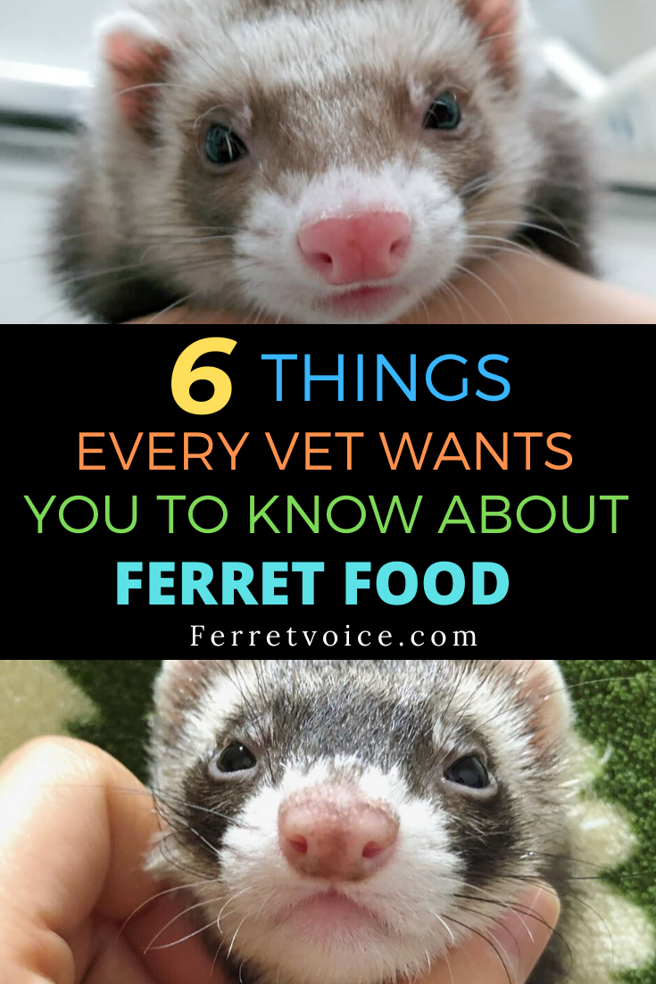 6 Things Every Vet Wants You To Know About Ferret Food Ferret Diet Ferret Pet Ferret