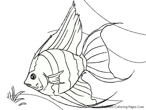 Tropical Fish Coloring Pages Realistic | Printables - Sealife ...