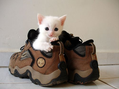 kitten #Katzen #KatzenliebenSchuhe #Schuhe #cats #catsloveshoes #shoes