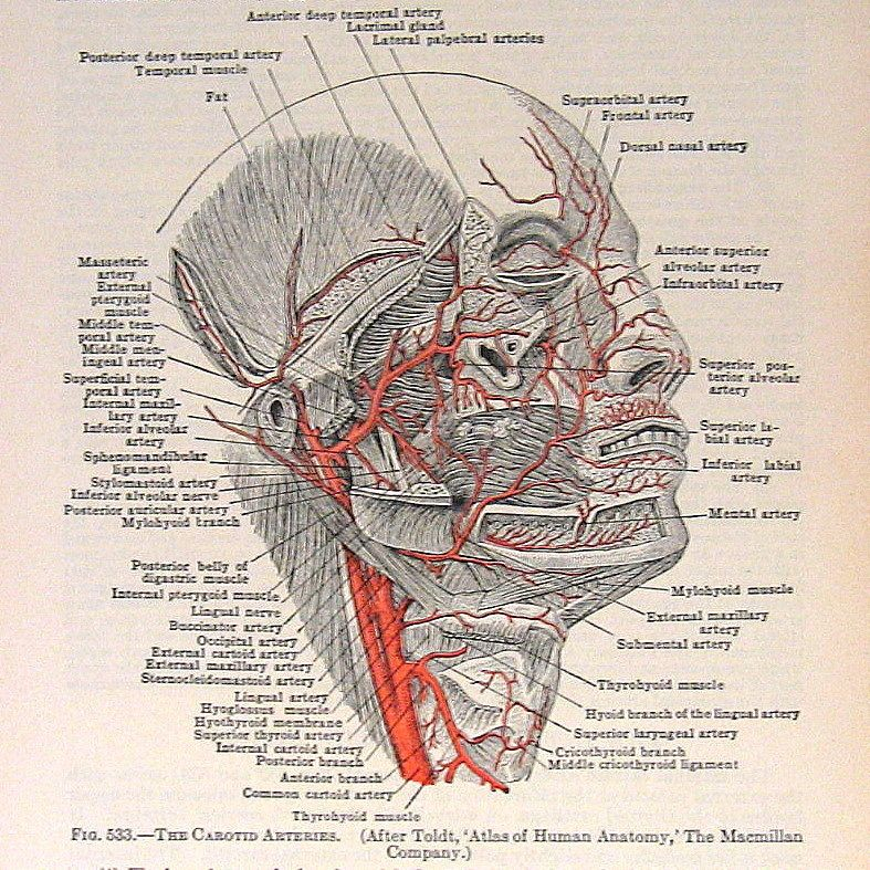 1933 Vintage Anatomy Book Plate With Images Vintage Medical
