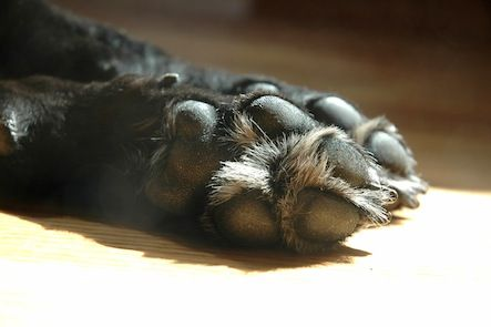 DIY Paw Wax to protect paws from winter ice and snow