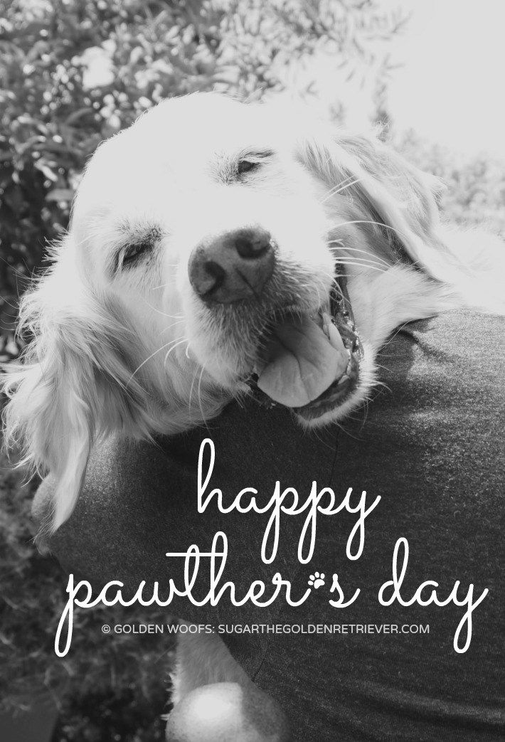 Happy Pawther S Day Sugar The Golden Retriever Dog Mom Quotes Dog Dad Quotes Dog Dad Gifts