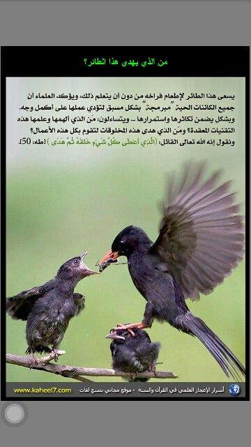 من الذي يهدي الطائر إلى طيره Quran Quotes Love Quran Quotes Holy Quran