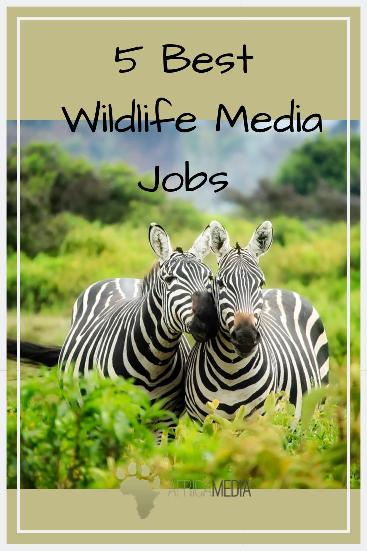 5 Best Wildlife Media Jobs Jobs With Animals Wildlife Wildlife Tourism