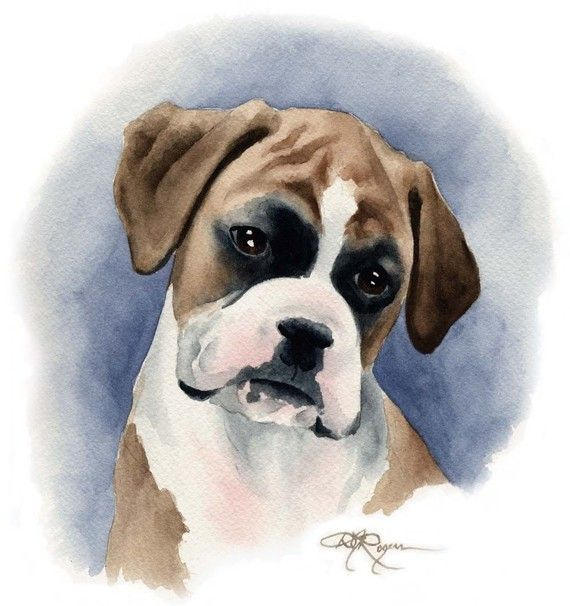 Boxer Puppy Art Print By Watercolor Artist Dj Rogers Dog Art