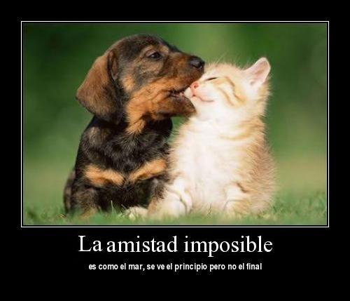 Imagenes De Perritos Tiernos Con Frases De Amor Perro Y