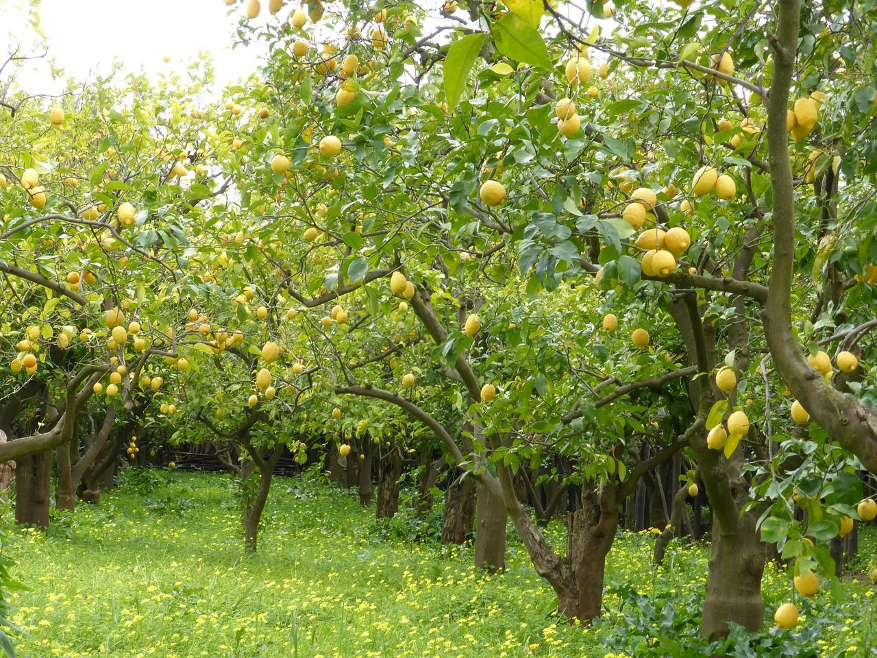 Nous Vivons Dans L Atmosphere Que Nous Creons Nous Sommes Le Produit De Nos Propres Pensees Chacun Peut S Entourer D In 2021 Fruit Trees Tree Photography Lemon Seeds