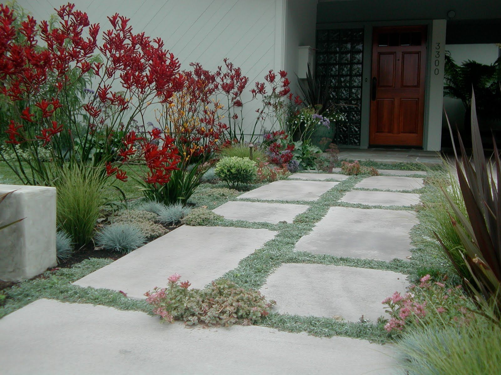 How to plant ground cover between pavers - Dymondia And Pavers Red Kangaroo Paw Blue Fescue Other Grasses And Flowering Plants This Is A Nice Mix Like The Grey Foliage Palette