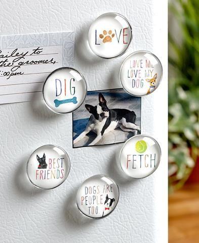 Pet Lover Magnet Set Cat Dog Glass Sentiments Colorful Artwork Great Gift Idea