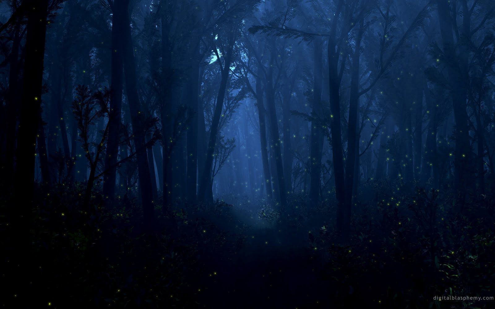 In The Woods At Night Night Forest Fantasy Forest Forest Photos