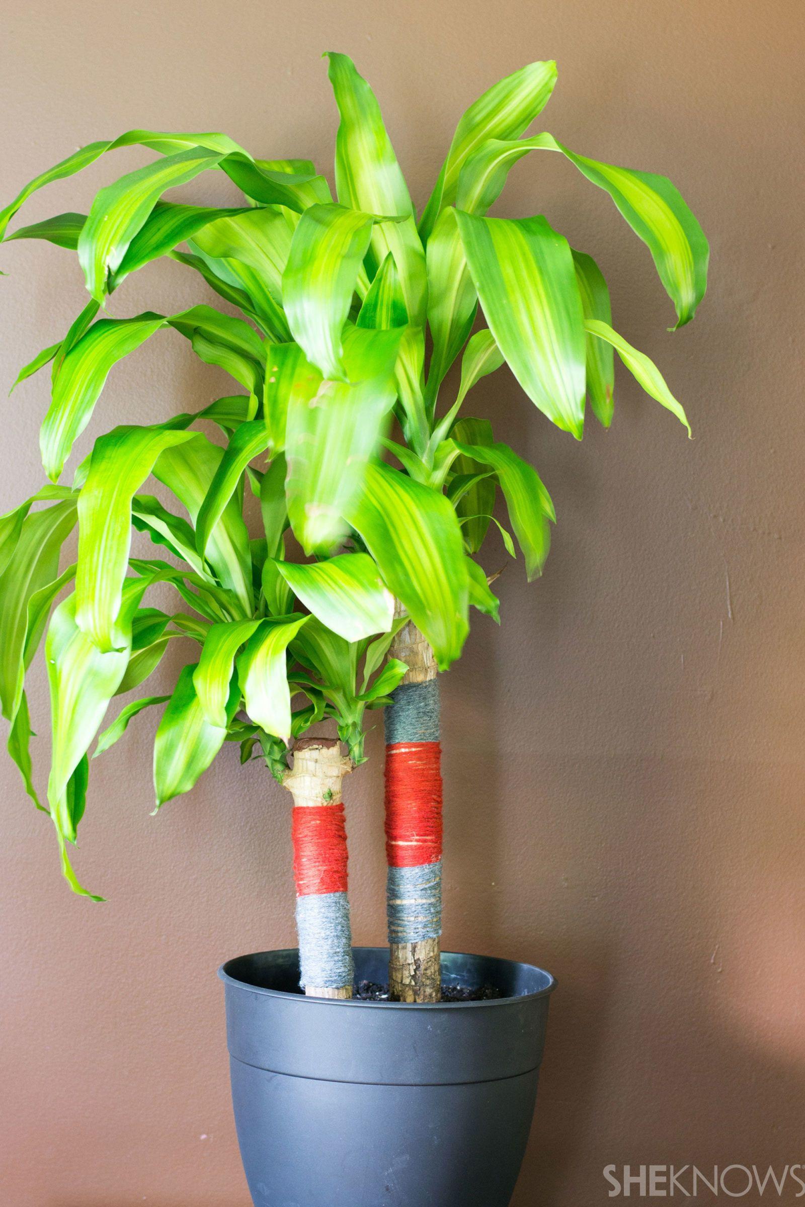 Yarn-Bombed Plant