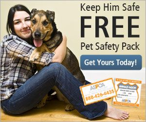 Pet Safety Pack Pet Safety Pets Aspca