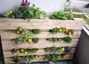 jardin vertical con una tarima