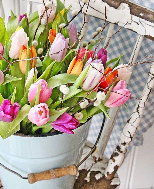 God morgen alle sammen ❤ Ønsker dere alle en strålende dag.  #tulips #tulipaner #springtimes #vintage #colorful #vibekedesign