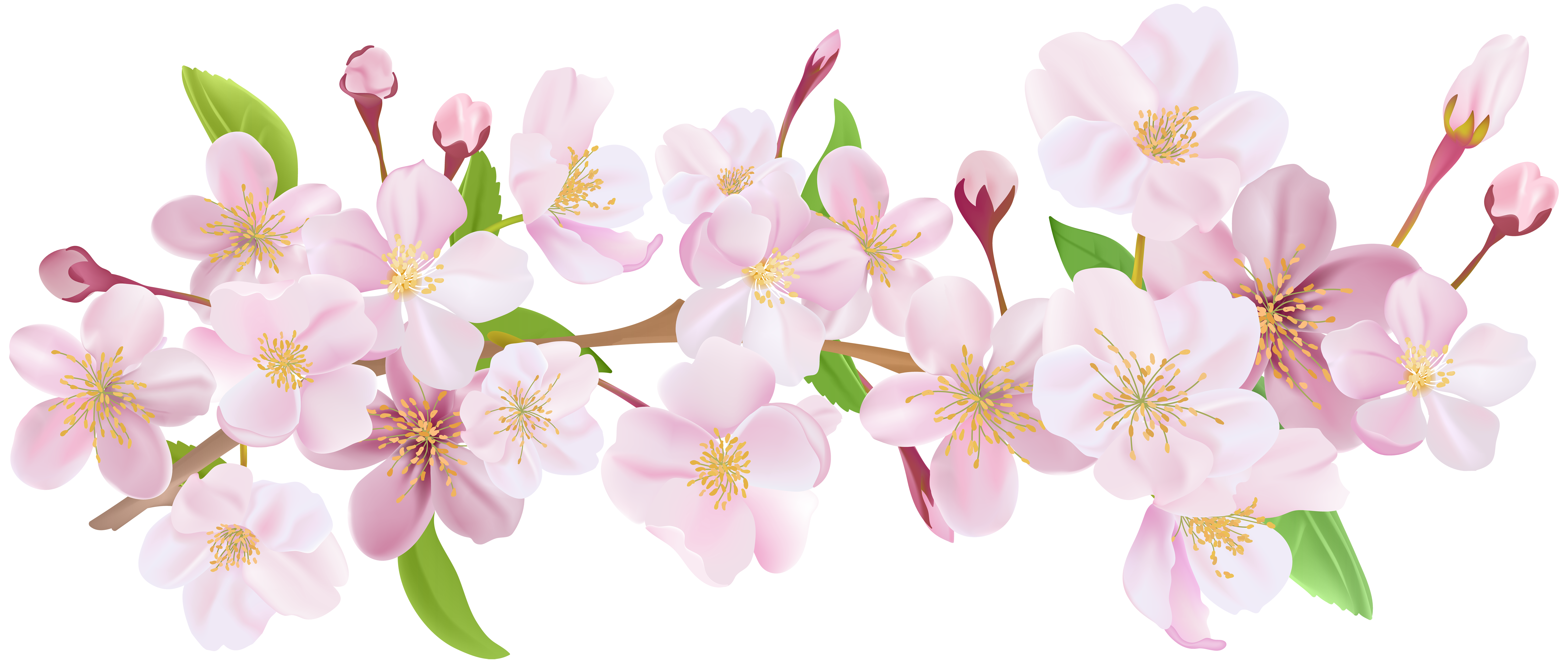 Cherry Blossom Spring Branch Png Clip Art Clip Art Spring Branch Cherry Blossom