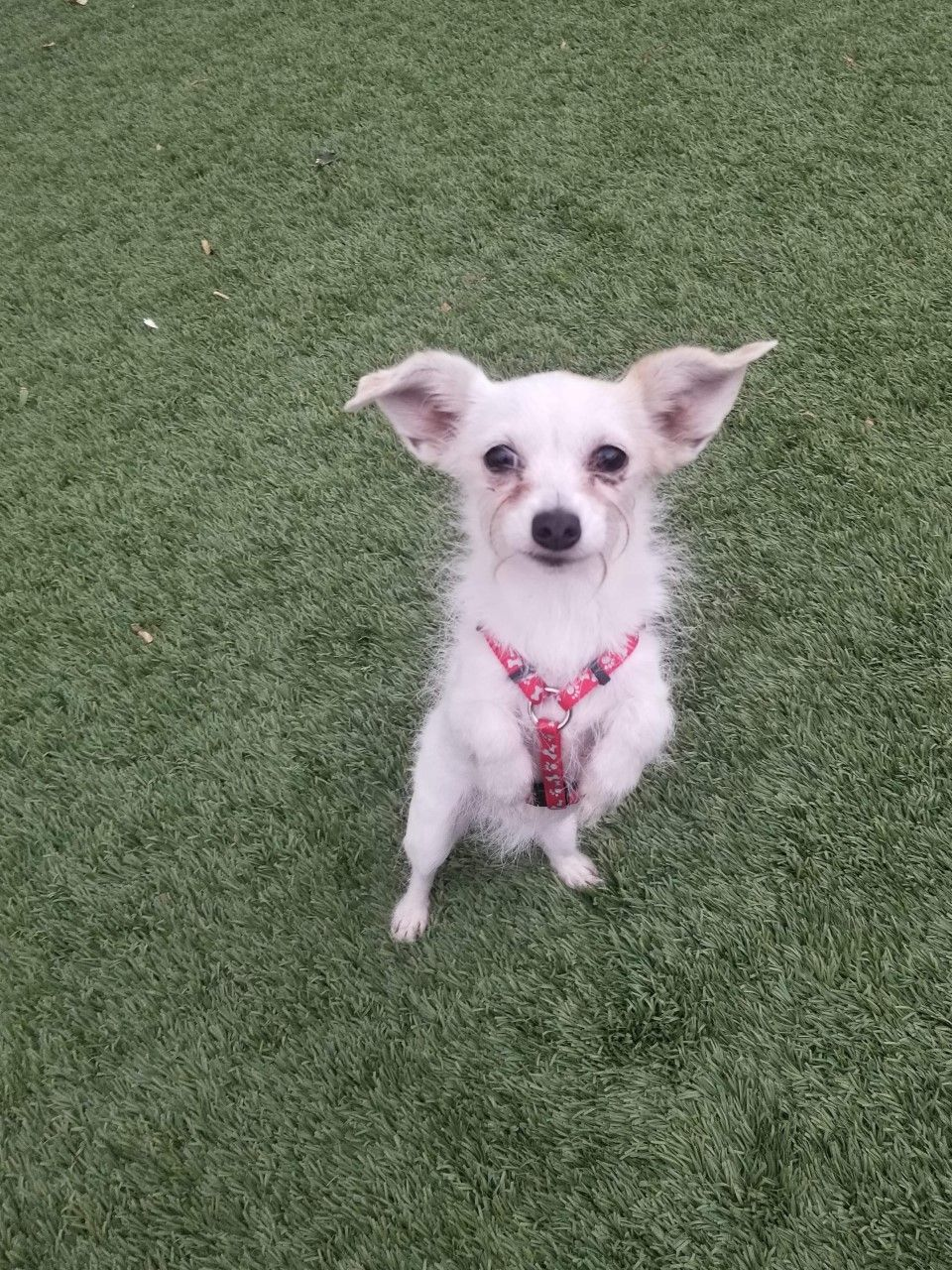 Adopt Minnnie On The Shelter Pet Project Pets Animals