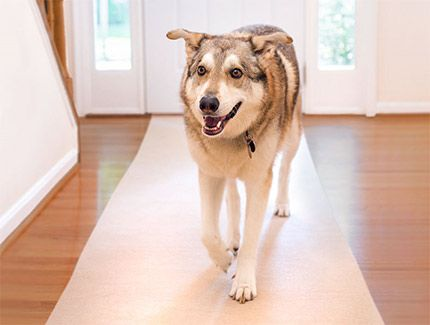 Hmmm Good Solution For My Laminate Floors And Foster Dogs Who Slip