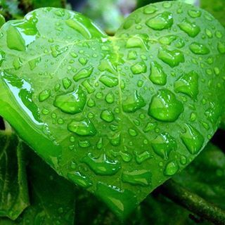 Le forme della natura. #amoilsilenziodelbosco #woods  #mywoods #green #ilovethegreen #ilovethenature #greenpeace #heart