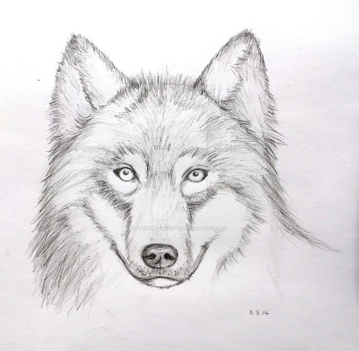 25 beautiful wolf face drawing ideas on pinterest wolf