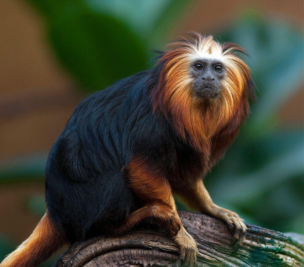 этом ответе фото самого экзотического животного файла подстановкой название