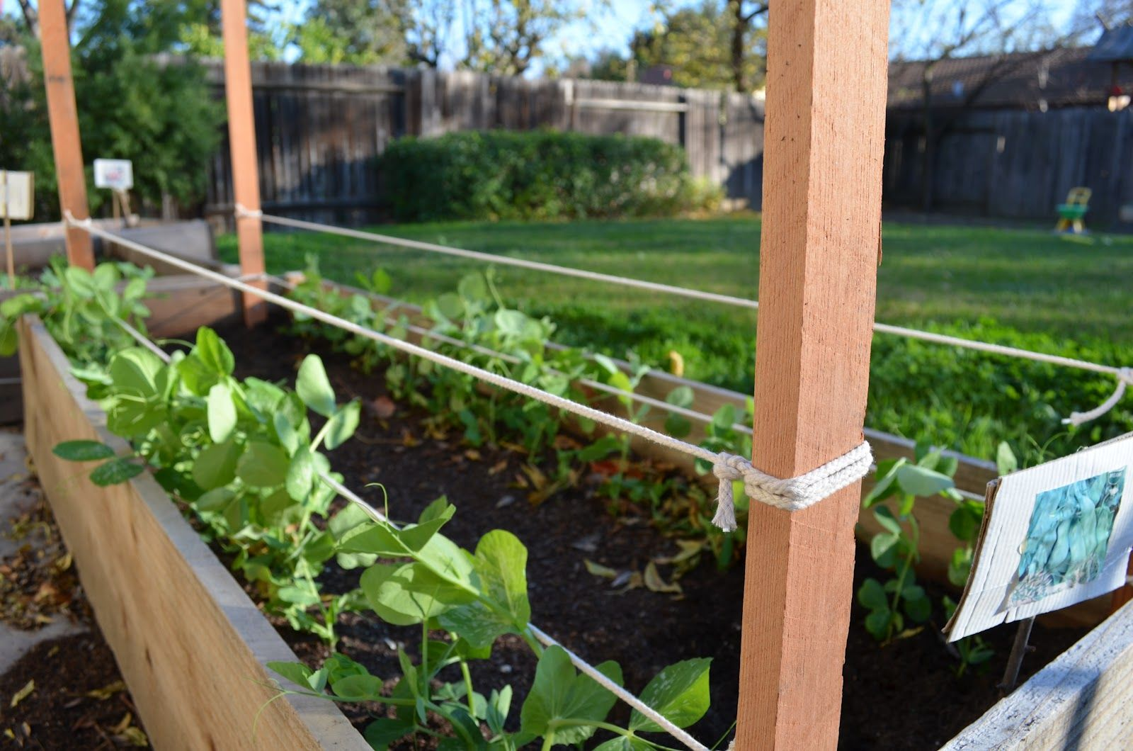 Pea trellis Ve able and Fruit Garden Pinterest