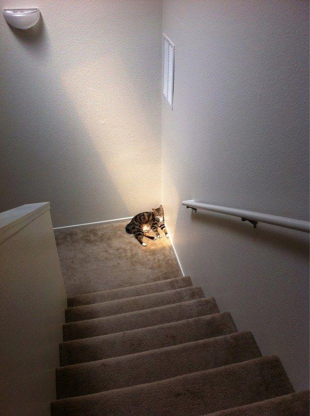 """Sunlight"""