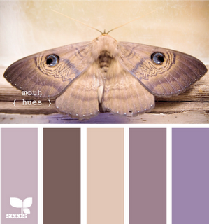Moth Hues .. Moth trying to hide itself on a patterned card in the kitchen.
