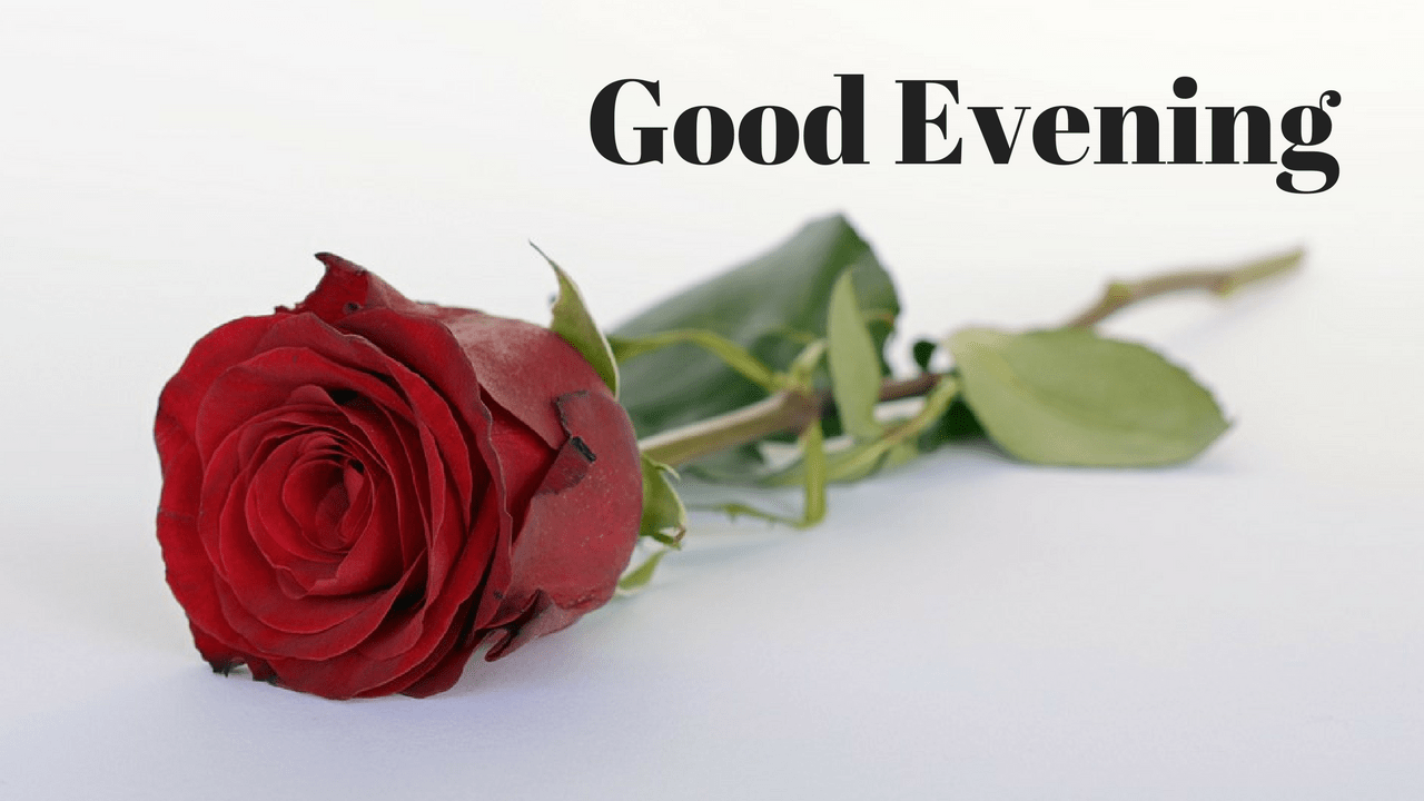 Good Evening Image With Red Rose Rose Day Wallpaper Good Night Flowers Happy Rose Day Wallpaper