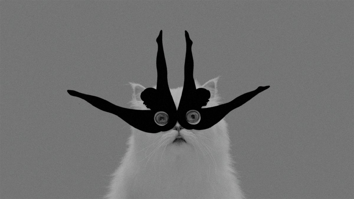 Tomorrow on NOWNESS: a feline frenzy from Midnight Juggernauts