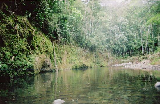Birdwatching trips to Tangkoko Nature Reserve, North Sulawesi, Indonesia