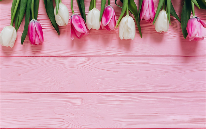 Download Wallpapers Pink Tulips Pink Wooden Background White Tulips Spring Flowers Floral Background Besthqwallpapers Com Flower Phone Wallpaper Floral Background Pink Tulips