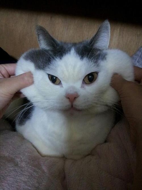 Esta gata que tiene una piel flácida más hermosa que tu vida entera. | 29 gatas que son mucho más sensuales que tú