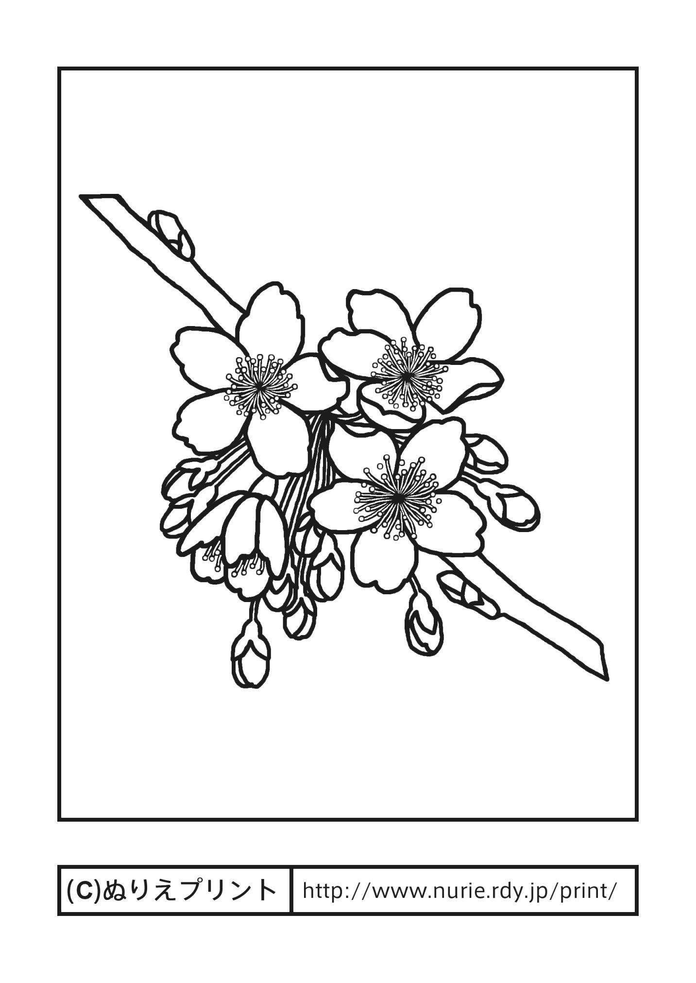 サクラ(主線・黒)/春の花/無料塗り絵イラスト【ぬりえプリント】