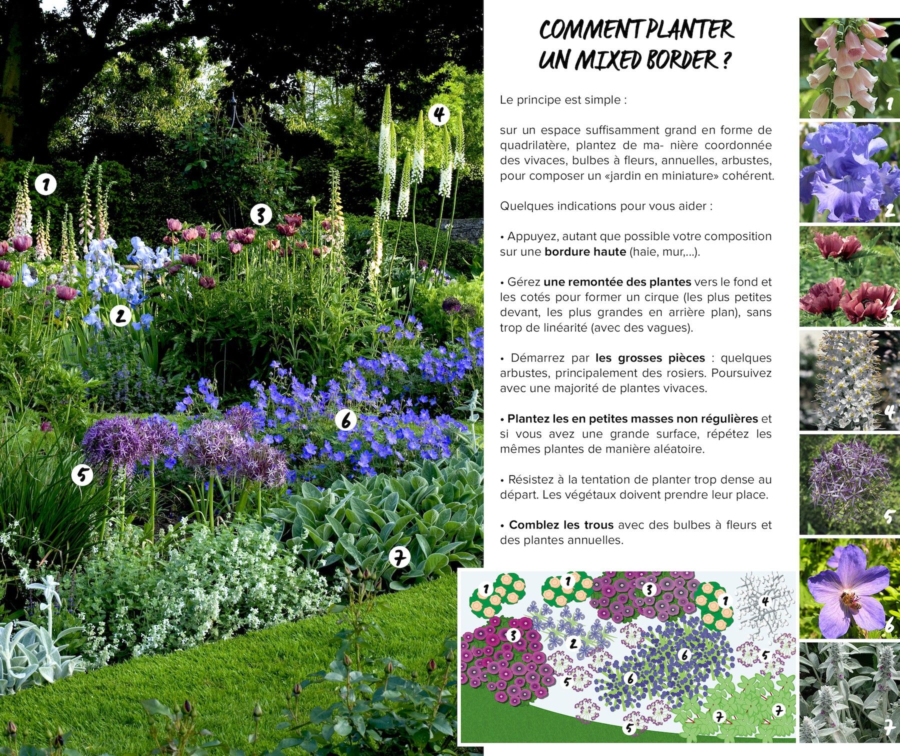 Comment planter un mixed border jardin potager future for Jardin anglais mixed border