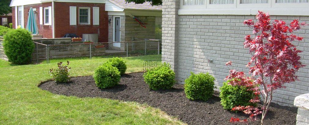 Boxwoods add interest to any garden bed.   http://hoosierhomeandgarden.com/