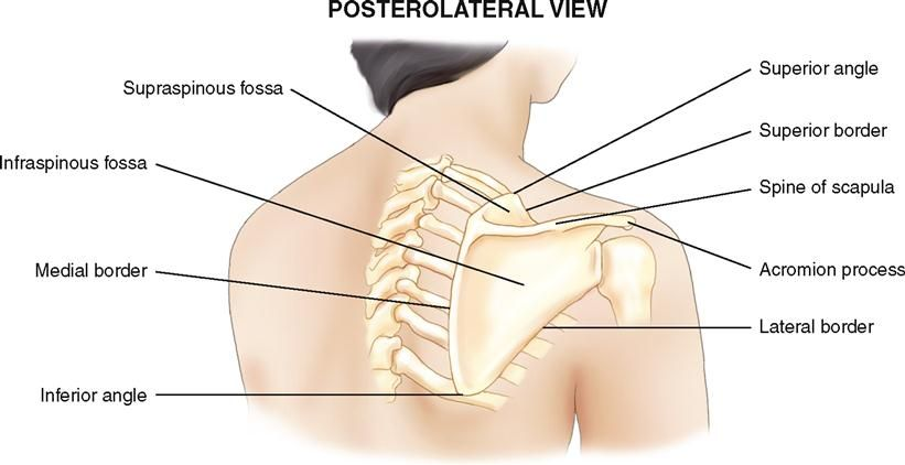 Image result for acromion process | My field of work | Pinterest ...