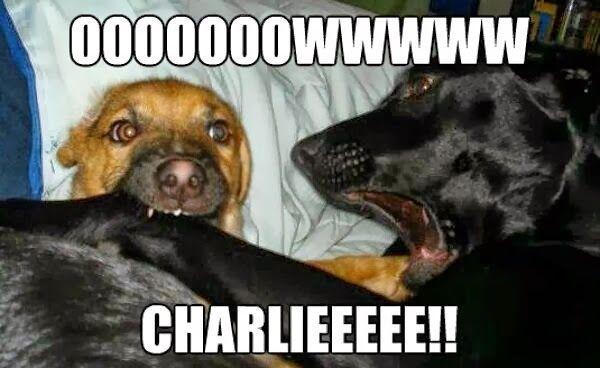 Funny animal captions - part 16 (30 pics) #animalcaptions Funny animal captions - part 16 (30 pics) #animalcaptions