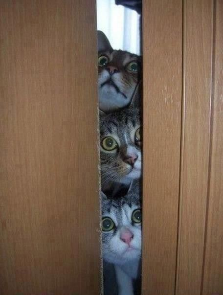 cats peeking - let us in! & cats peeking - let us in!!! | Cats in windows \u0026 doorways ... Pezcame.Com