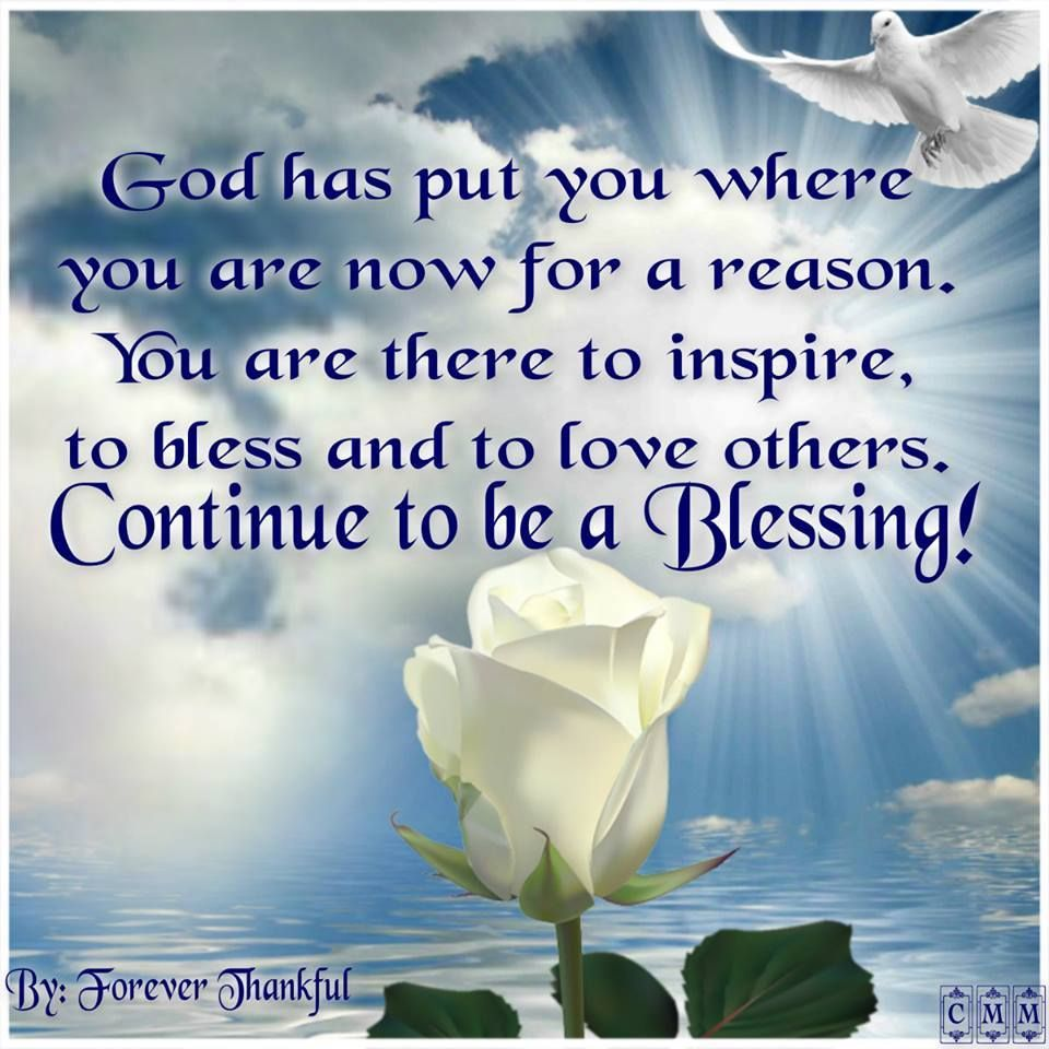 You Are A Blessing Quotes Fascinating God Has Put You Where You Are Now For A Reasonyou Are There To