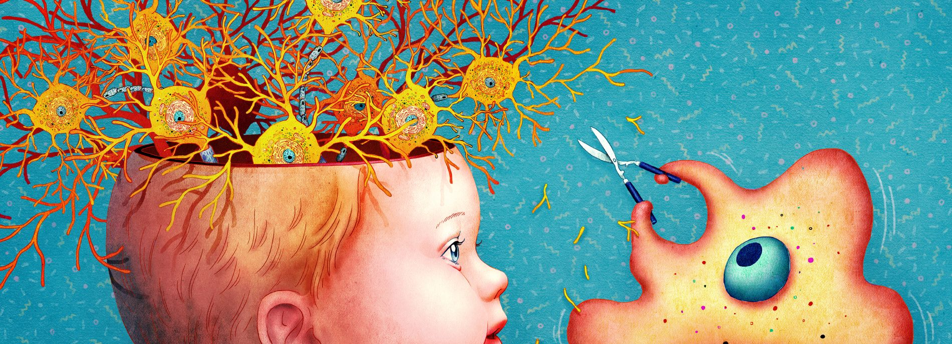 Once thought merely to be specialized immune system cells, microglia now appear to be master landscapers of the developing brain.