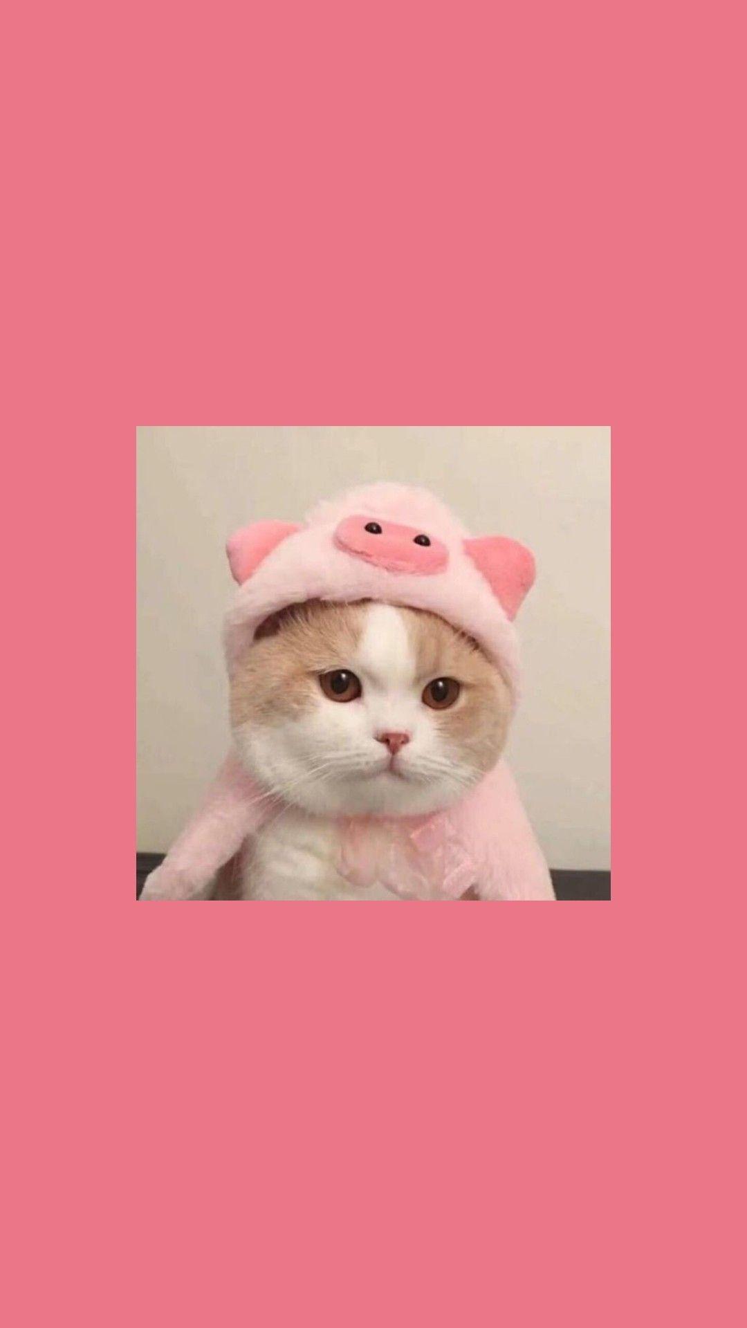 Wallpaper Cat Gambar Hewan Lucu Gambar Hewan Anak Kucing Menggemaskan